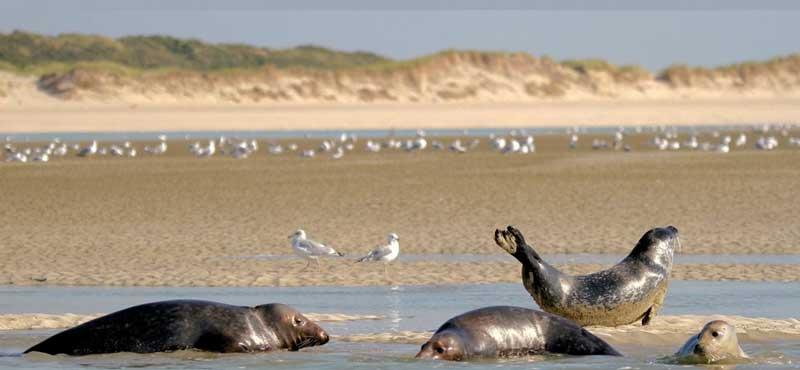 Découvrez la baie d'Authie avec le camping les Jardins de la Mer. Sorties organisées le 27 Juillet et le 17 Août 2021.